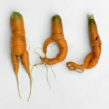 carrots